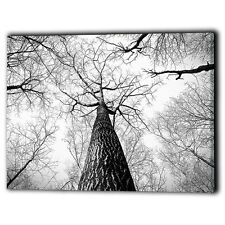 Black & White Forest Trees High Woods Canvas Framed Panel - New Wall Art Prints