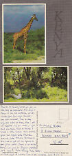 1980's DUAL VIEWS OF KENYA AFRICA COLOUR POSTCARD