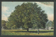1910s JACKSONVILLE FLORIDA WATER OAK RIVERSIDE AVE POSTCARD