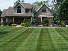 5 LBS  SUNNY BLEND GRASS SEED MIX FALCON FESCUE PERENNIAL RYE KY. BLUEGRASS