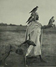 Algerian Falconer Algérienne Fauconnier Fauconnerie 1910 3 Page Photo Article