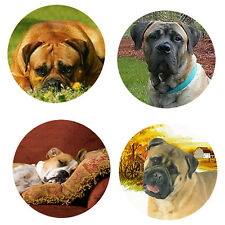 Bullmastiff Magnets: 4 Bullmastiffs for your Fridge or Collection-A Great Gift