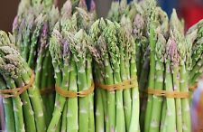 ASPARAGUS SEEDS, (Mary Washingto ) 400 Organic,Heirloom  Seeds~Perennial