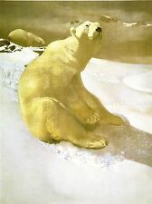 PAINTINGS LANDSCAPE ARCTIC POLAR BEAR COOL ART POSTER PRINT LV3182