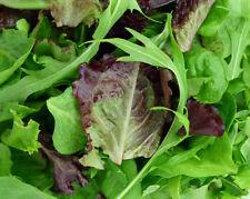 kit de Salades + 850 Graines 8 variétés BIO seeds légumes plantes jardin potager