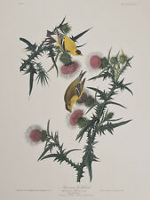 Audubon - American Goldfinch. 33 - Birds of America Abbeville Edition FOLIO