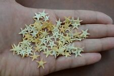 "500 PCS TINY SMALL FLAT TAN STARFISH SEASHELL CRAFT DECOR 1/4"" - 1/2"" #7144"