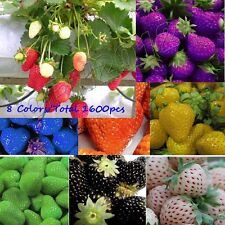 1600x Delicious Strawberry Seeds Planting Everbearing Vegetable Fruit Berry Grow