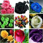 35 Semi di Rosa tanti colori entra e scegli