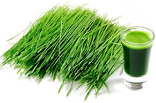 8 oz. ORGANIC BARLEY GRASS JUICE POWDER ~ SUPERFOOD ~ FREE SHIPPING