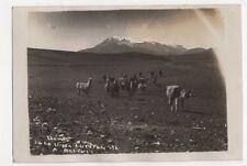 Chile, Llamas En La Linea Antofagasta A Bolivia RP Postcard, B240