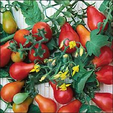 Red Fig Heirloom Tomato 25 Seeds Moon Gardens Simply Grown Beautifully