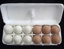 12 PACK 6 BROWN & 6 WHITE CERAMIC DUMMY CHICKEN NESTING EGG HATCHING CRAFT!