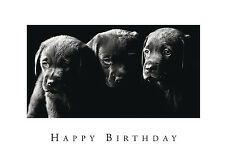 Birthday Card Black Labrador Puppies Perfect for Dad Brother Granddad FREE POST!