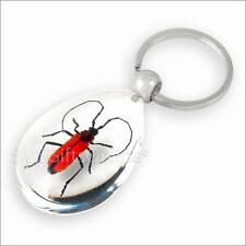 Clear Acrylic Amber Red Longhorn Beetle Keyring Insect Keychain
