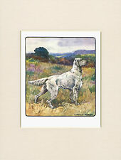 ENGLISH SETTER LOVELY 1905 ANTIQUE DOG PRINT by VERNON STOKES READY MOUNTED