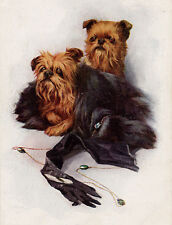 BRUSSELS GRIFFON CHARMING DOG GREETINGS NOTE CARD TWO BEAUTIFUL DOGS