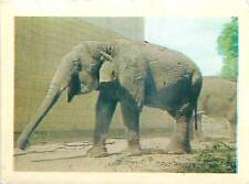 Éléphant d'Asie Elephas maximus Asian elephant Asiatic Asia OLD CARD IMAGE