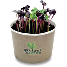 SpiceHomey Indoor Herb Growing Kit - Leafy Radish Organic Gif. Grow Your Own