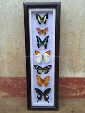 Real 7 Butterfly Garden Plans Display Taxidermy Insect Framed - Beautiful #BT21