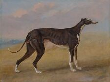 Pintura Animal Sport Garrard George Fox Greyhound Turk Art Print lah467a