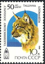 Russia 1989 Zoo/Lynx/Cats/Nature/Animals/Conservation/Wildlife 1v (n32207)