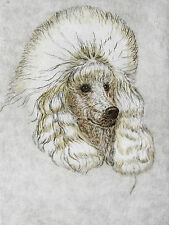 GEOFFREY LASKO - TOY POODLE DOG  - HAND COLORED ETCHING - S&N - FREE SHIP