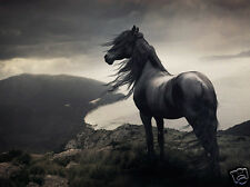 BEAUTIFUL HORSE in the WILD * QUALITY CANVAS ART PRINT