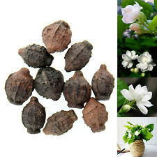 10pcs Gardenia Jasmine White Shrub Aromatic Fragrance Flower Seeds Fresh Seed*