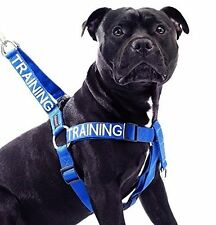 Non Pull Pet Dog Strap Harness Color Coded TRAINING Blue Front Back Strong Clip