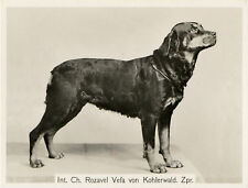 ROTTWEILER OLD NAMED CHAMPION DOG VINTAGE IMAGE ON GREETINGS NOTE CARD