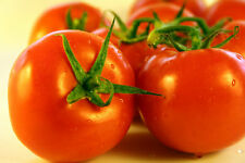 A 0.2g (appr.50) tomato seeds ALKA very productive early dwarf variety, GMO free