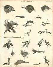 1802  Ornithology Beaks And Feet Of Birds Copperplate