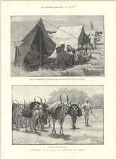 1890 Exercise Camp Indian Troops Native Officers Bullocks Carrying Sepoy Kits