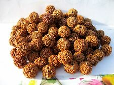 5 MUKHI RUDRAKSHA / FIVE FACE RUDRAKSH - TOP QUALITY -NEPAL 18-20 MM -51 PIECES