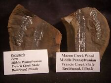 Mazon Creek Fossils Pecopteris Fern and Wood Braidwood, IL