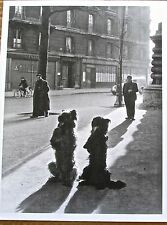 Robert Doisneau  Two Dogs at Attention  13 X10 Photo Reprint