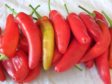 10 graines de POIVRON HUNGARIAN SWEET WAX - Paprika - Légume potager