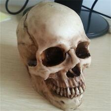 New Small Human Skull Replica Resin Model Medical Realistic Halloween Gift