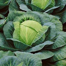 Cabbage Non-GMO Heirloom EARLY COPENHAGEN MARKET 2000 SEEDS Heavy Yielder Keeper