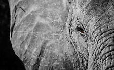 A3 Poster - Black & White Image of an Old Timeless Elephant (Picture Print Art)
