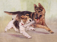GERMAN SHEPHERD AND WIRE FOX TERRIER CHARMING DOG PRINT MOUNTED READY TO FRAME