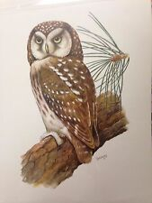 Owl on a Branch By R. A. Vowles
