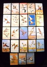 Lot of 23 Single Vintage Swap Playing Cards-Game birds by artist Richard Bishop