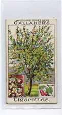 (Ja9635-100)  GALLAHER,WOODLAND TREES,THE CHERRY TREE,1912#24