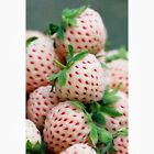 Fresa Blanca Pineberry Frutas sabor PIÑA con FRESA 50 Semillas Seeds Samen