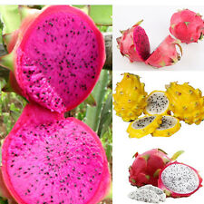 200 seeds 4kinds mix pitaya dragon fruit yellow Seed Fragrant cactus rare exotic