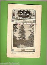 #D258. NEW  SOUTH  WALES  SCHOOL  MAGAZINE  2nd July  1934
