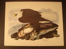 """Vtg John J. Audubon Print """"White Headed Eagle"""" - 15""""x11 1/4"""""""