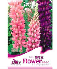 FD1577 Lupine Flower Seed Lupinus L. Flower Seeds ~1 Bag 15 Seeds~ Free Shipping
